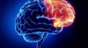 دکتر مغز