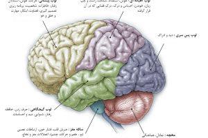 طول عمر بیماران تومور مغزی